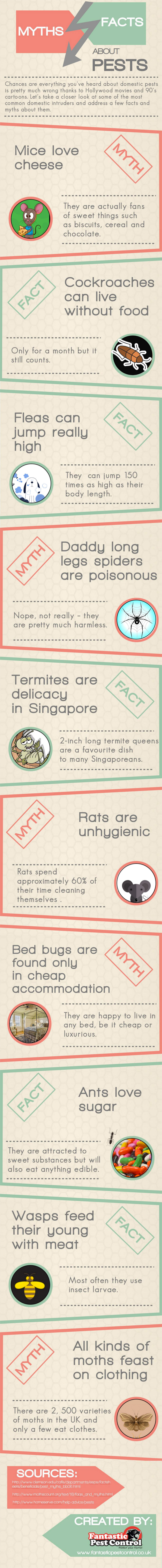 myths about pests infographic