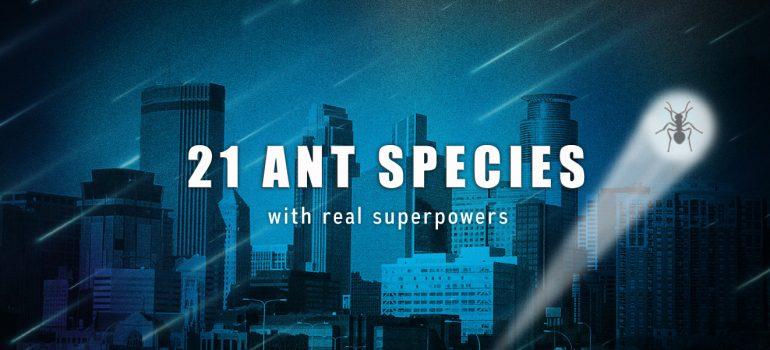 Extraordinary ant species