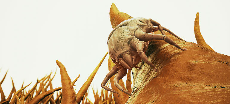 How to get rid of dust mites in your home fantastic pest for How to stop spiders coming in your home