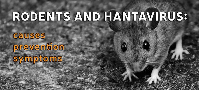 rodents and hantavirus causes prevention and symptoms. Black Bedroom Furniture Sets. Home Design Ideas