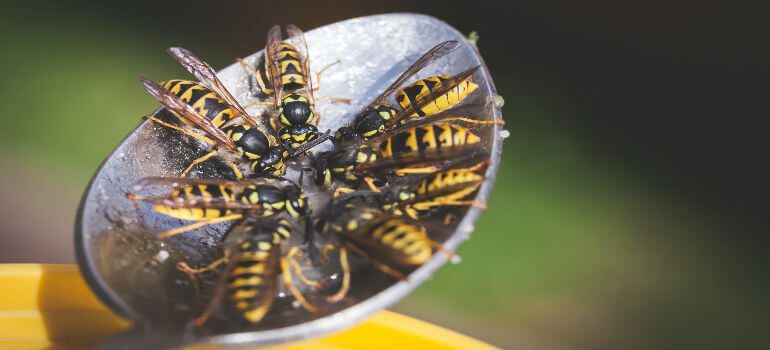 what s the difference between wasps bees and hornets