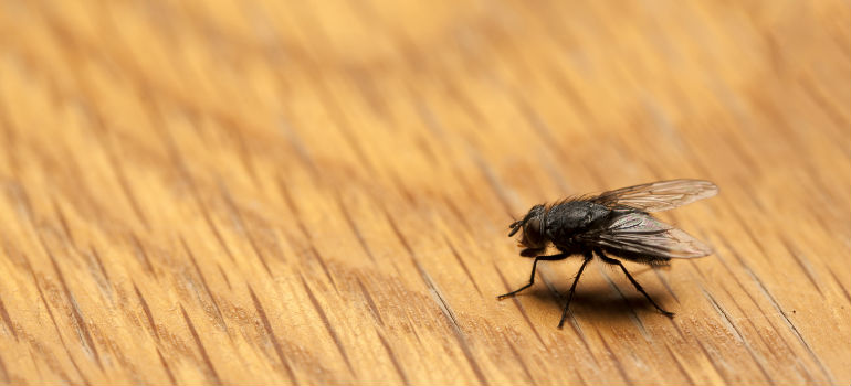 How To Get Rid Of Horseflies Around The Swimming Pool Fantastic Pest Control