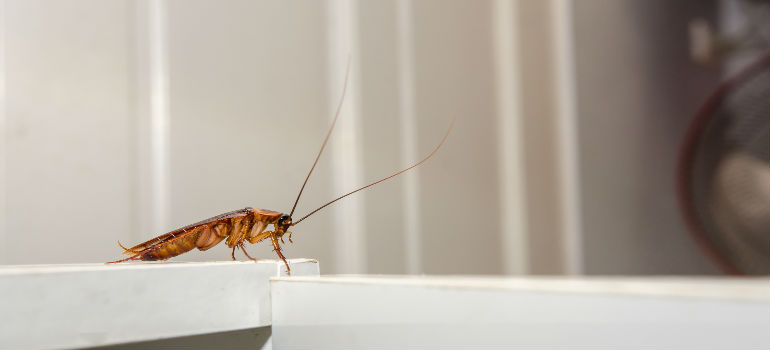 How To Avoid Cockroaches When Moving