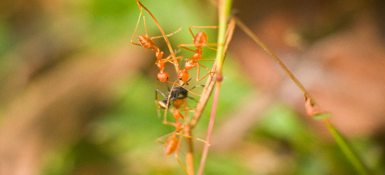 How to Get Rid of Ants in the House