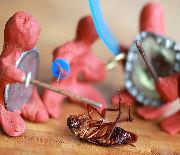 S.T.O.P the Pest