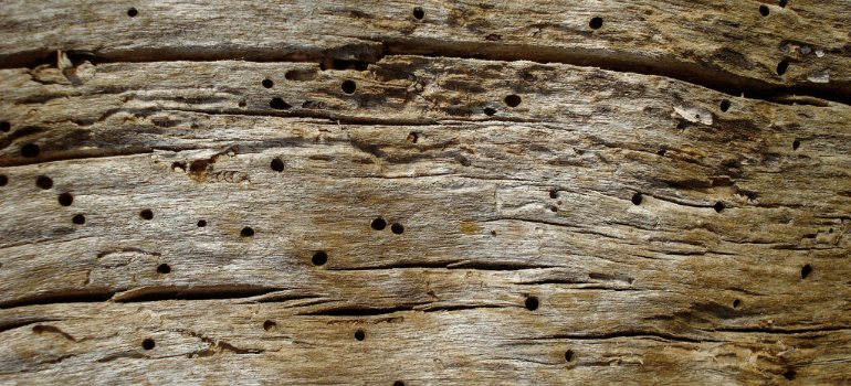 holes on wood furniture made by wood boring beetles