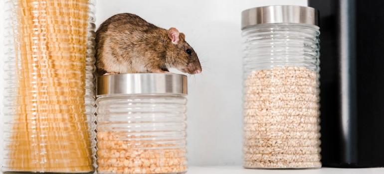 tips on how to prevent pantry pests