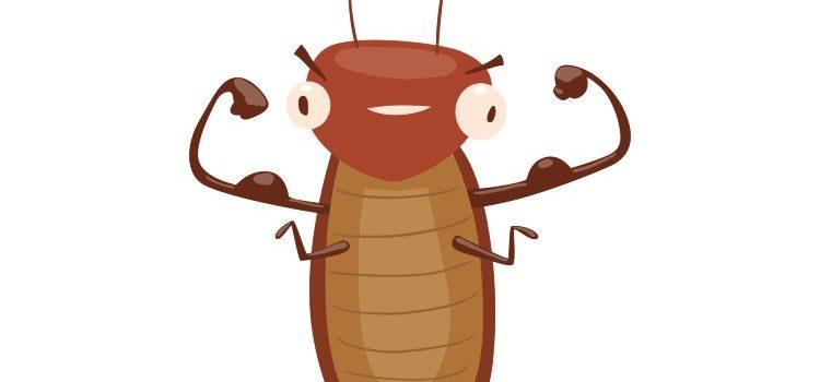 insect control Fantastic Pest Control