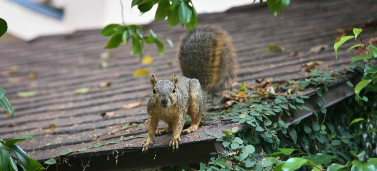 Squirrel control by Fantastic Pest Control