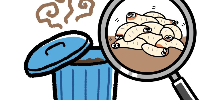 how to get rid of maggots