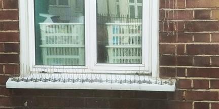 Installation of bird spikes