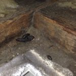 Rat droppings -signs of rats