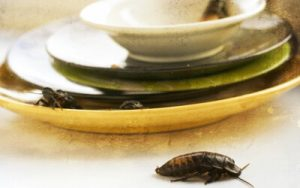 Diseases cockroaches carry