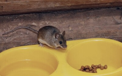 What attracts mice - pet food